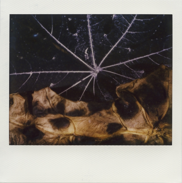 Connected Landscapes#makeble#surreal#poetic#Polaroid#ImageSpectra#Landscapes#ImpossibleProject#Insta